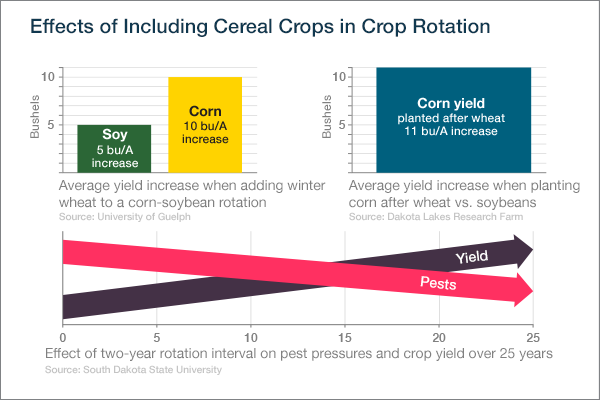 Cereal Crop Effects