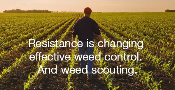 resistance is changing effective weed control and scouting message with field in background