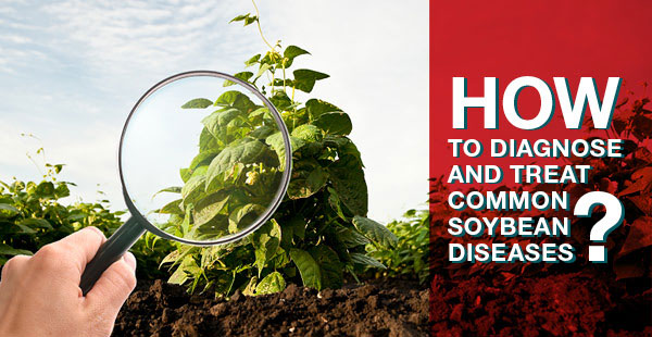 How to diagnose and treat common soybean diseases bean plant inspected with magnifying glass