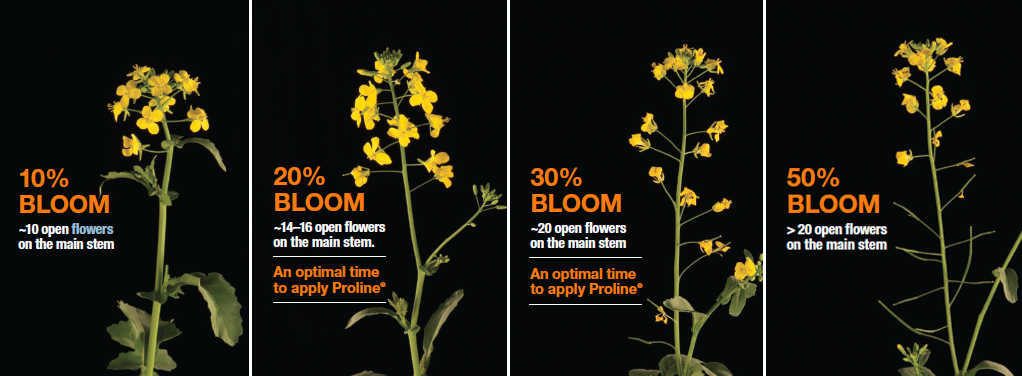 application timing for Bayer's Proline fungicide