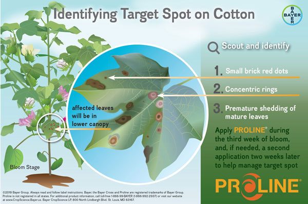 identifying target leaf spot on cotton infographic