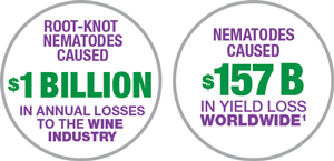 Nematodes caused $157 B in Yield Loss Worldwide