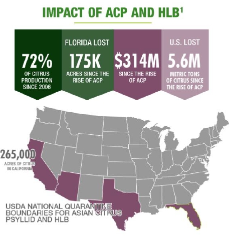 Impact of ACP and HLB