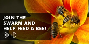 Join the swarm and help Feed A Bee