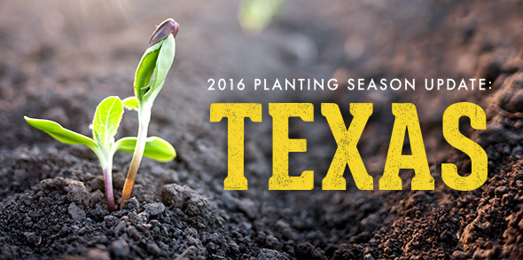 2016 Planting Season Update: Texas