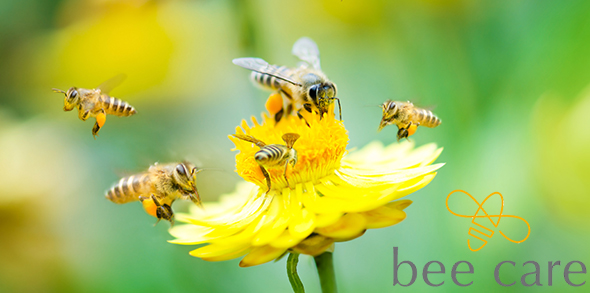 Group of honey bees pollinating yellow flower