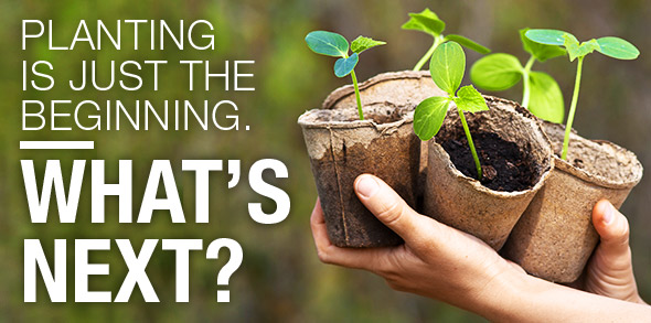 Planting is just the beginning. What's next?