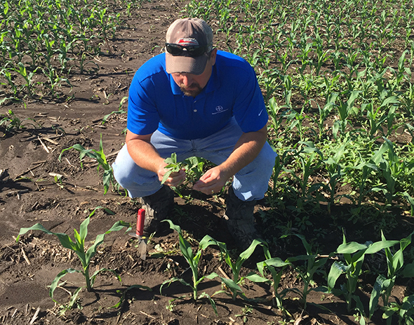 Mike Weber does growing point management for water hemp weed control