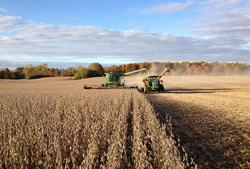 Corn being harvested in mid-western United States