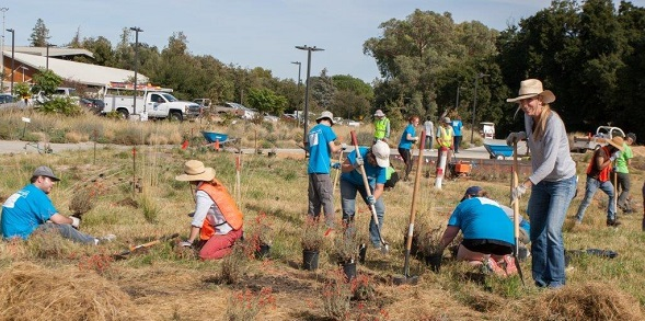 Bayer West Sacramento employees volunteer on days of service