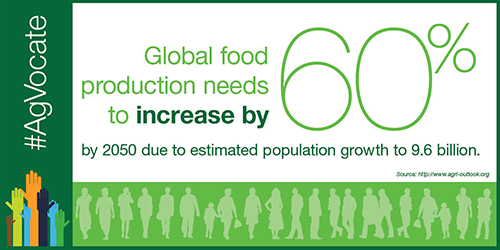 Global food production needs to increase 60% by 2050
