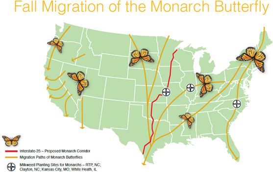 fall migration of the monarch butterfly