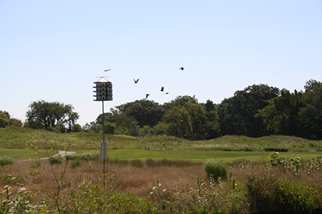 field with hive