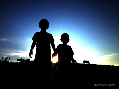 kids looking at cows in the sunset