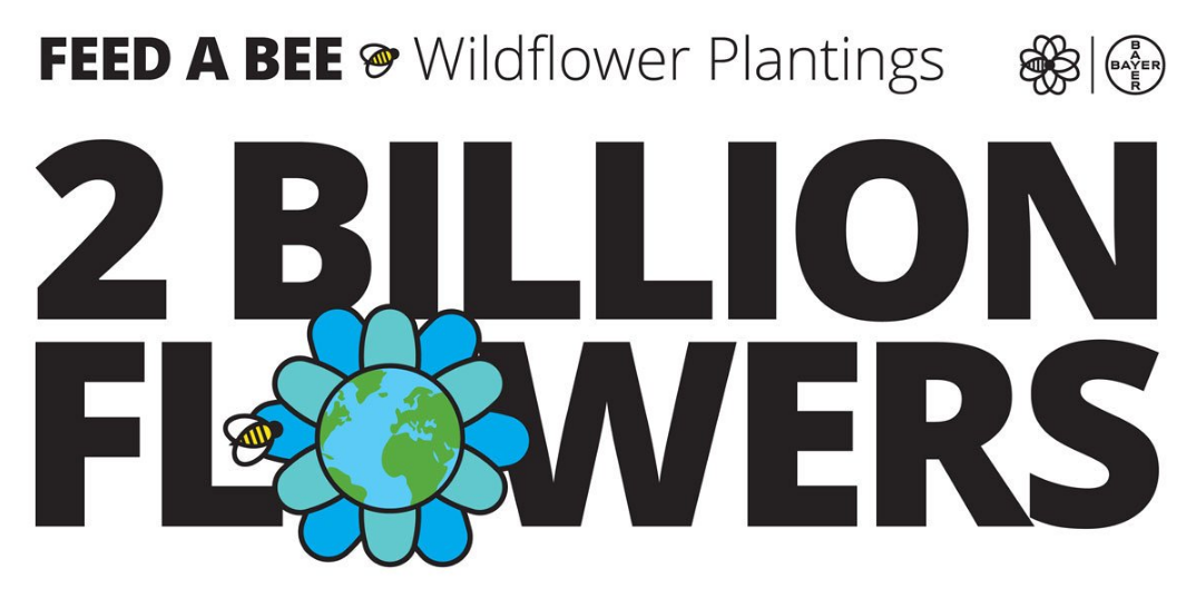 Feed a Bee – Planted 2 billion wildflowers