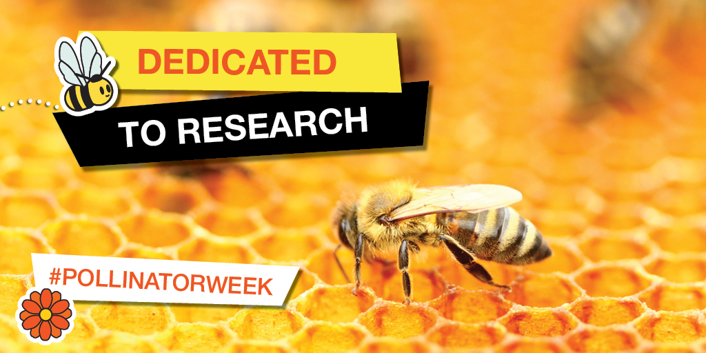 Dedicated to Research - #pollinatorweek