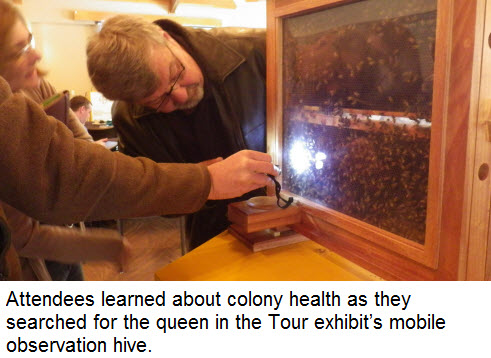 Attendees learned about colony health as they searched for the queen in the Tour exhibit's mobile observation hive.