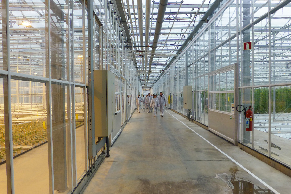 Visiting the breeding greenhouses in Nunhem, the Netherlands, to see the resistance tests in pickling cucumber, which are an important part of the breeding work in pickling cucumber