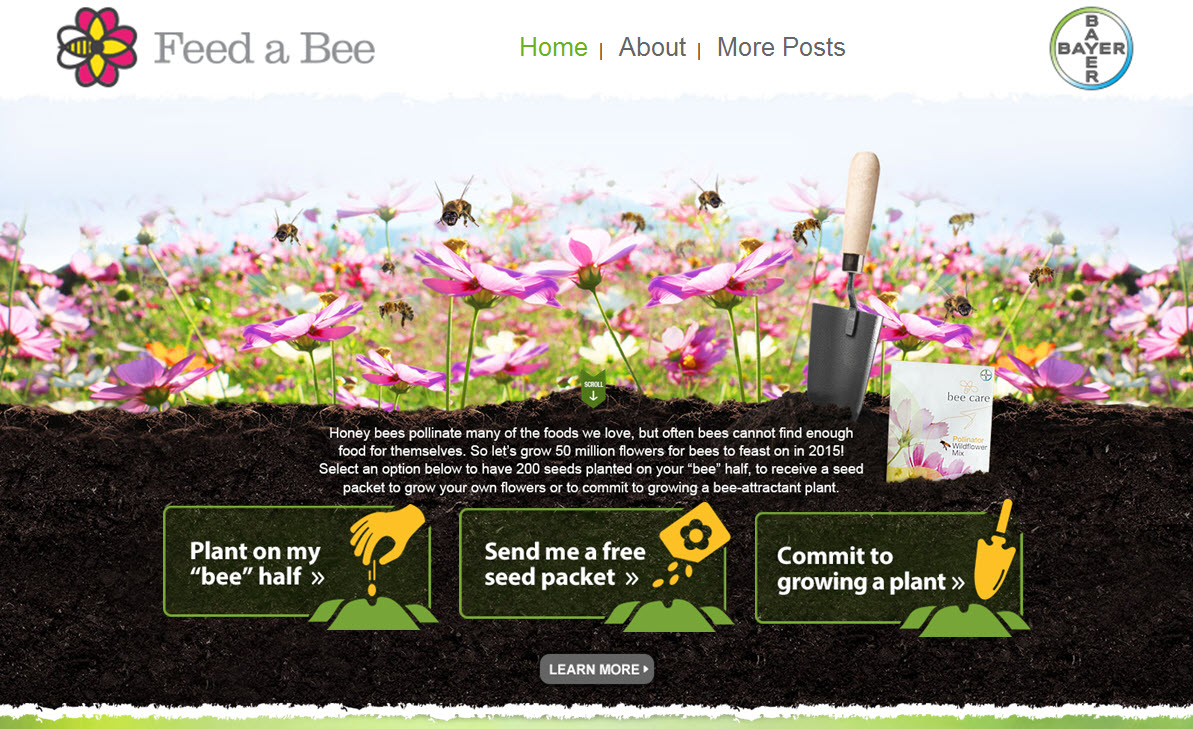 feed a bee website