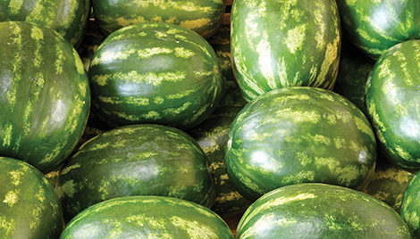 luna fungicide header watermelon
