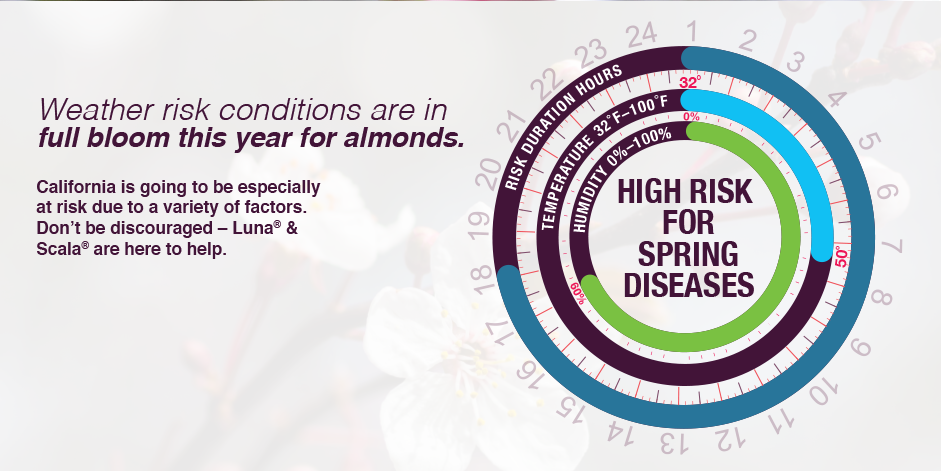 Circular graphic shows how wet and humid weather contribute to higher risk for spring diseases. Weather risk conditions are in full bloom this year for almonds.