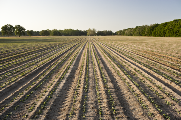 protect peanut crops with propulse fungicide
