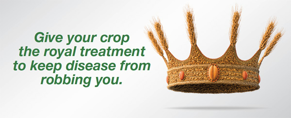 Give your crop the royal treatment to keep diseases away