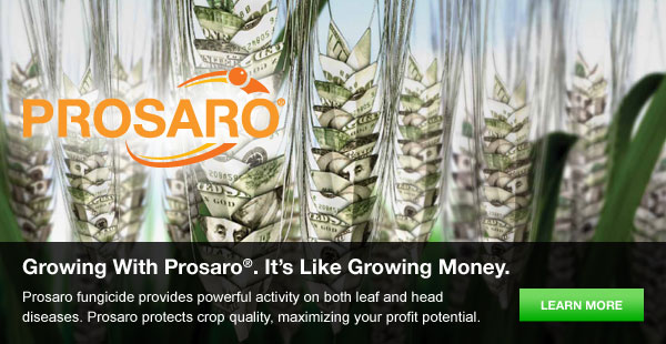 Growing with Prosaro, It's like Growing Money