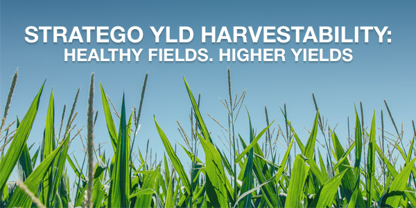Stratego YLD Harvestability: Healthy Fields. Healthy Yields