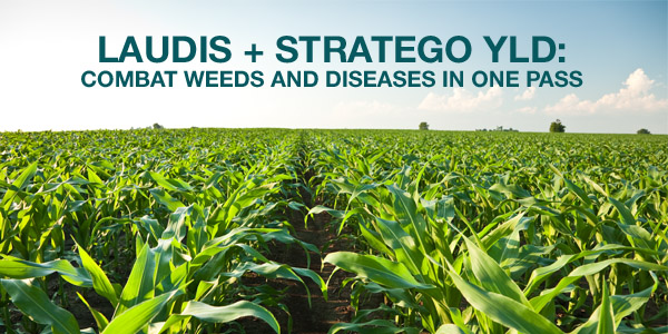Laudis + Stratego YLD: Combat Weeds and Diseases in One Pass