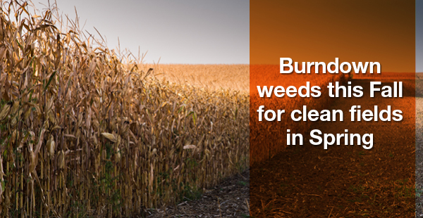 Burndown weeds this Fall for clean fields in Spring