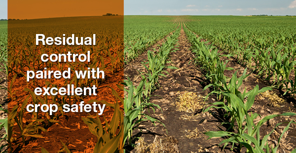 Residual control paired with excellent crop safety