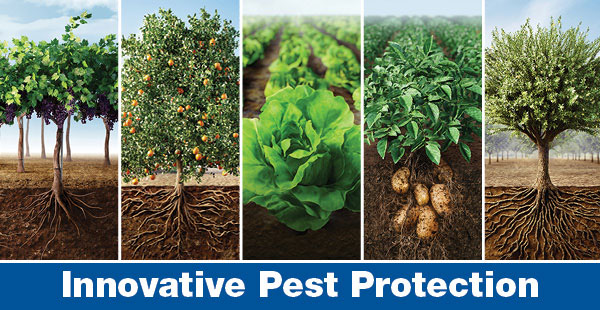 Movento is innovative pest protection for multiple crops