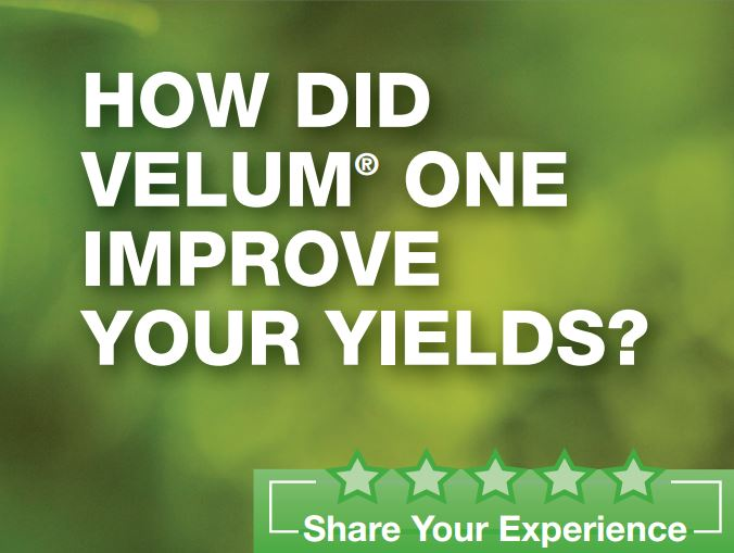 How did Velum One Improve Your Yields?