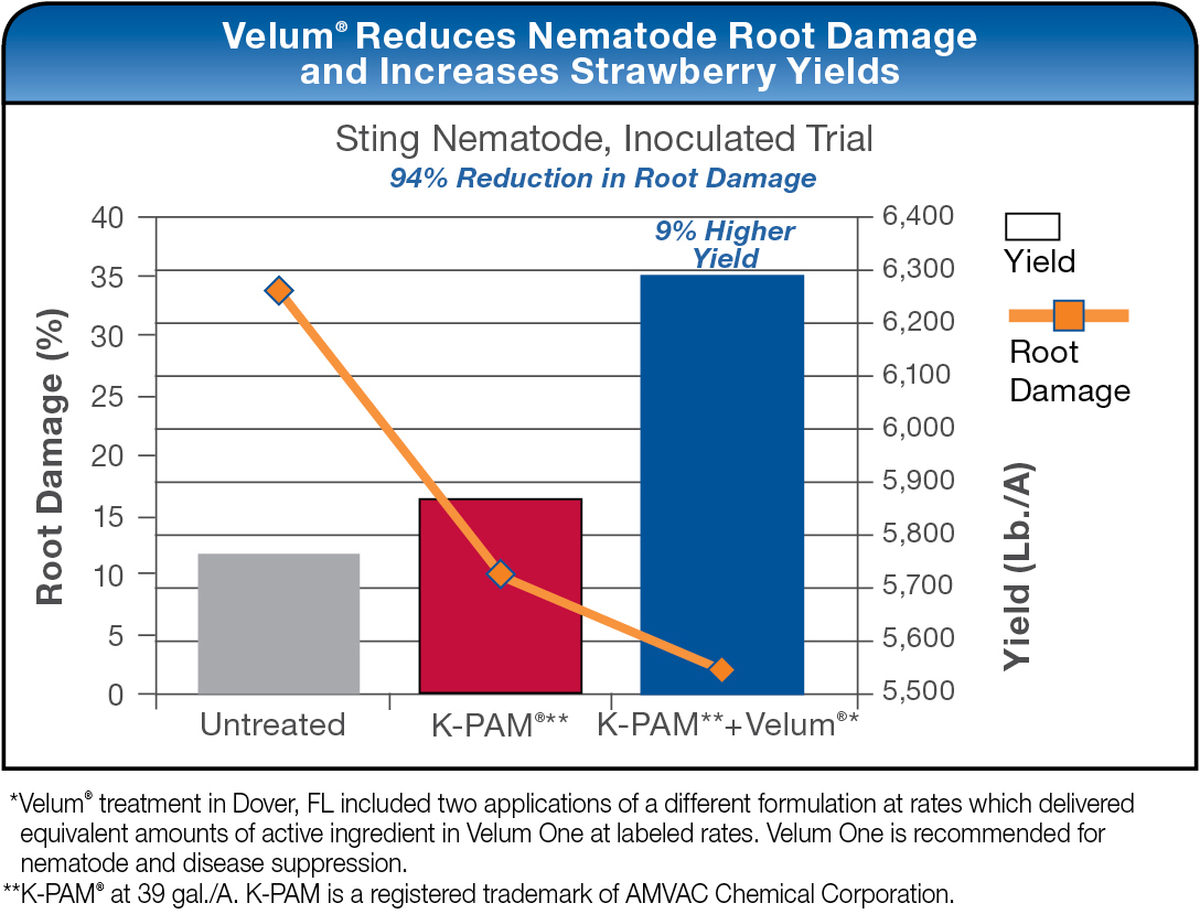 Velum Reduces Nematode Root Damage and Increases Strawberry Yields