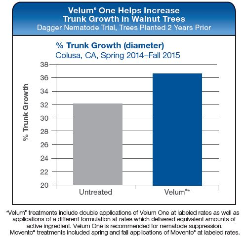 Velum One Helps Increases Trunk Growth in Walnut Trees