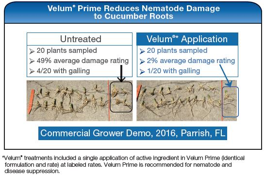 Velum Prime Reduces Nematode Damage to Cucumber Roots