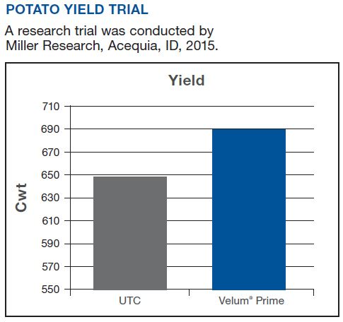 Potato Yield Trial