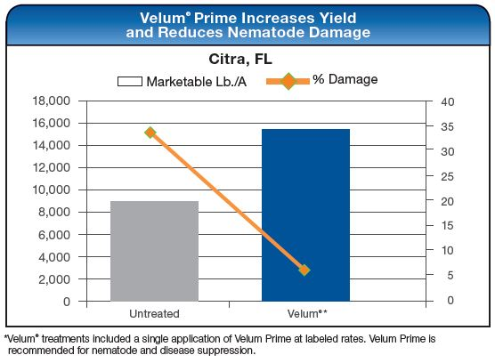 Velum Prime Increases Yield and Reduces Nematode Damage