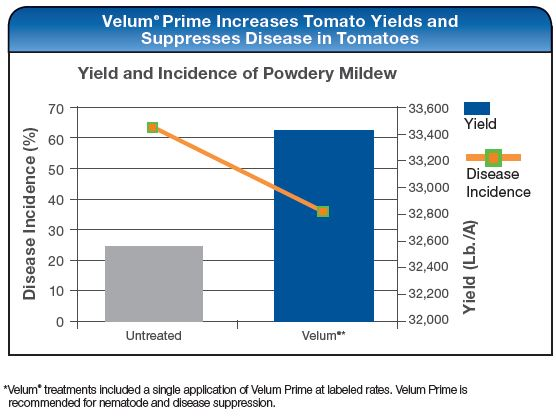Velum Prime Increases Tomato Yields and Suprresses Disease in Tomatoes