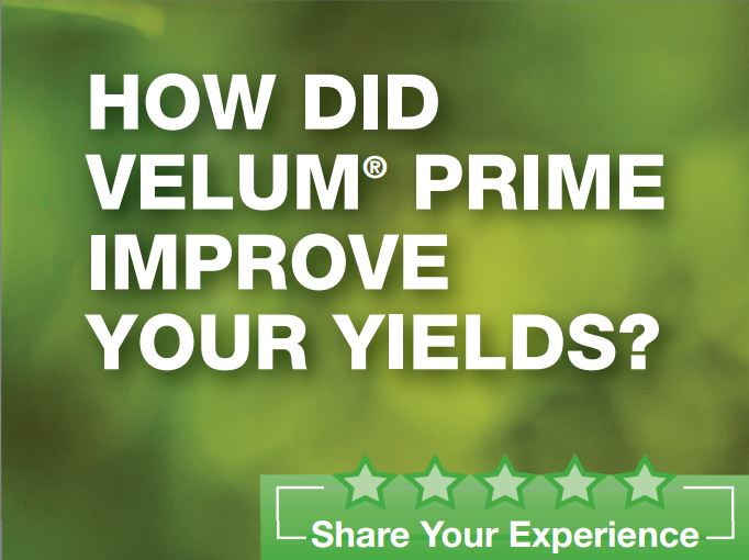 Share Your Experience with Velum Prime