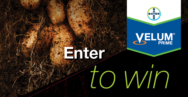 Velum® Prime Potato Expo Giveaway