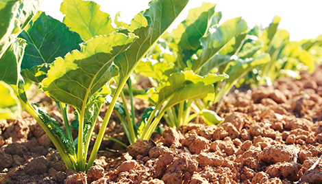Poncho Beta seed treatment header sugarbeets