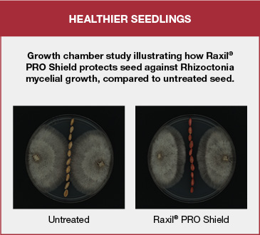 Growth chamber study illustrating how Raxil PRO Shield protects seed against Rhizoctonia mycelial growth