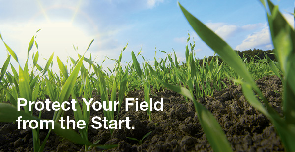 protect your field from the start with raxil seed treatment