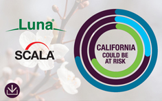 Luna Scala - California could be at risk