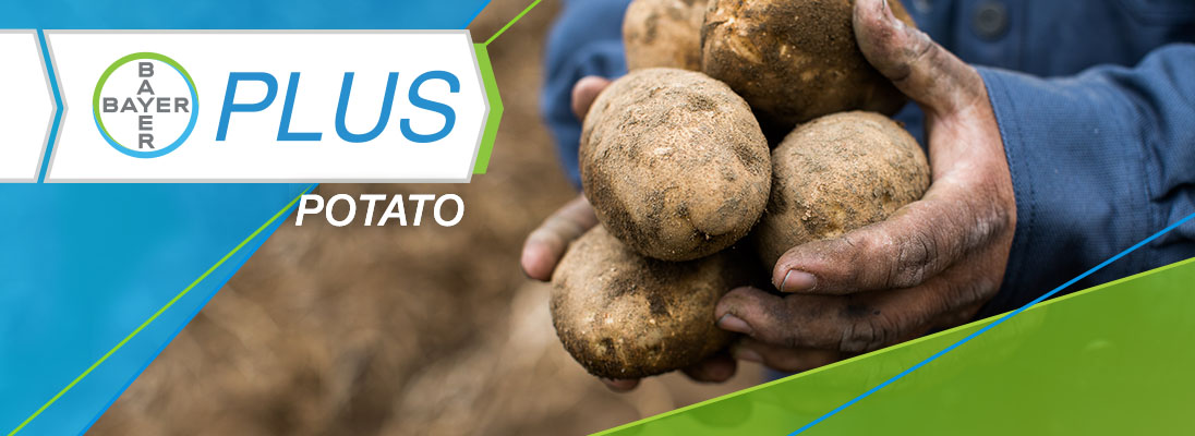 Bayer plus potato program logo with potatoes