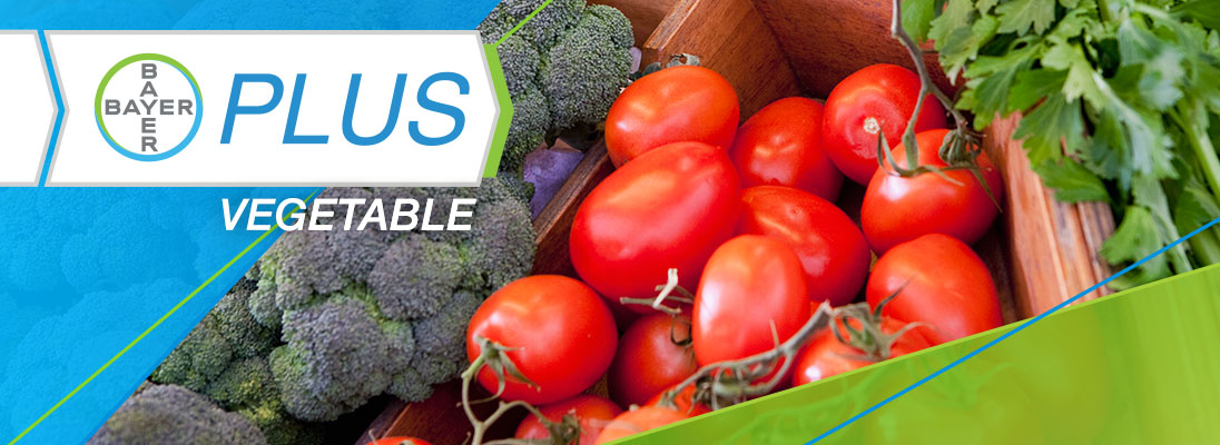 Bayer plus vegetable program logo with vegetables