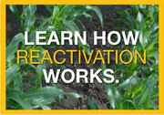 Learn How Reactivation Works.