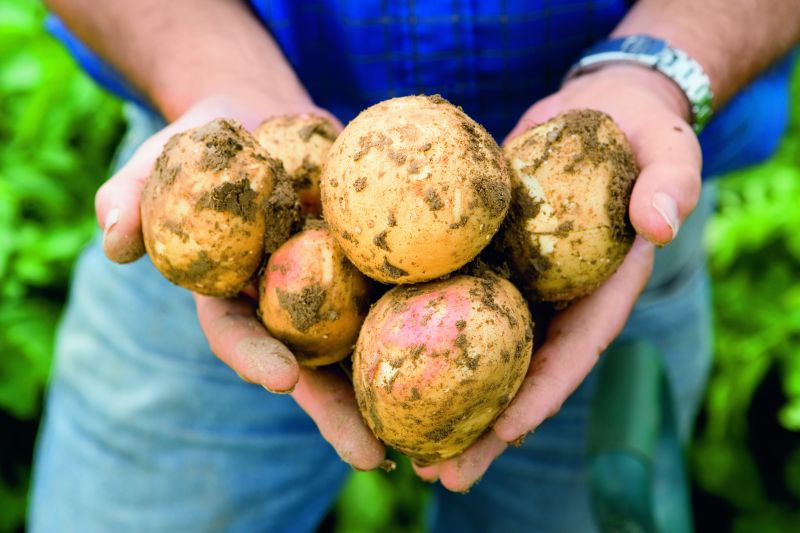 Integrated strategies offer the strongest protection for potato growers